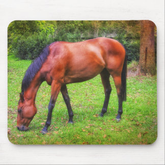 brown horse grazing mouse pad