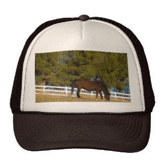 Brown Horse Grazing Trucker Hat