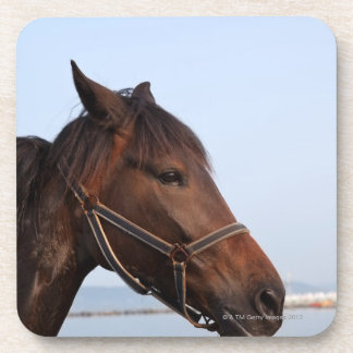 Brown horse head beverage coaster