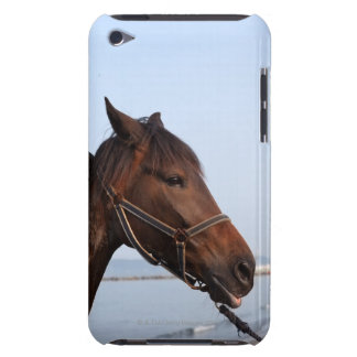 Brown horse head iPod touch case