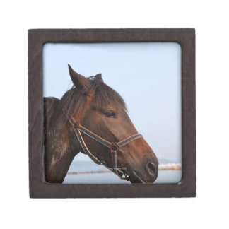 Brown horse head premium trinket box