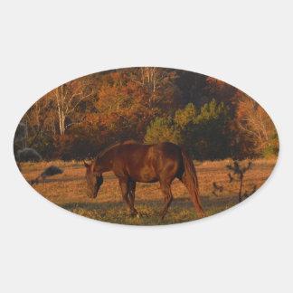 Brown horse in a Autumn feild Oval Sticker
