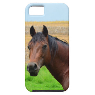 Brown Horse in a Field iPhone 5 Cases