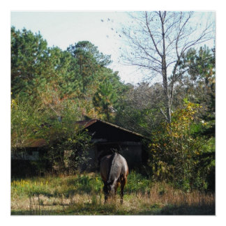 Brown Horse in Front of Barn Poster Perfect Poster