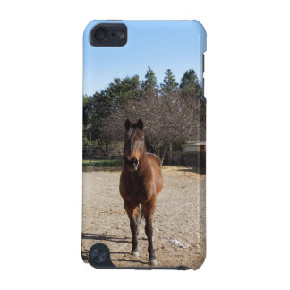 Brown Horse in Los Alamos, CA iPod Touch (5th Generation) Case