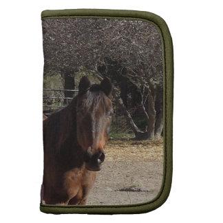 Brown Horse in Los Alamos, CA Planner