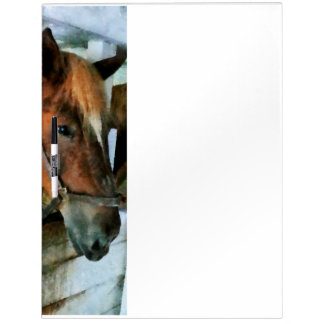 Brown Horse in Stall Dry Erase Boards