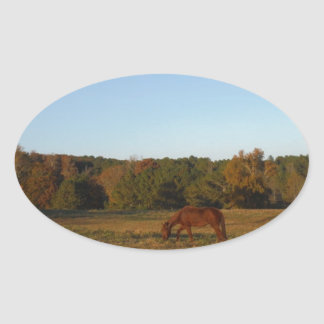 Brown horse in  the Sun Oval Sticker