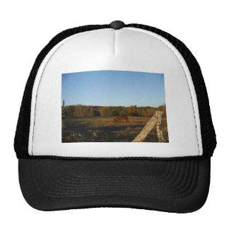 Brown horse in  the Sun Trucker Hat
