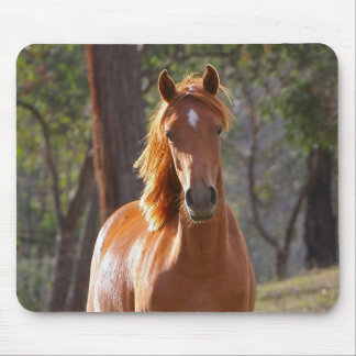 Brown Horse in the Sunlight Mouse Pad