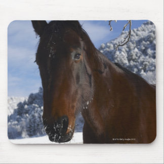 Brown horse in winter mouse pad