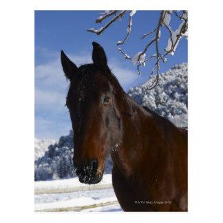 Brown horse in winter postcard