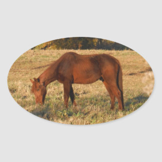 Brown horse in  yellow tree field oval sticker