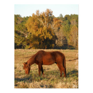 Brown horse in  yellow tree field postcard