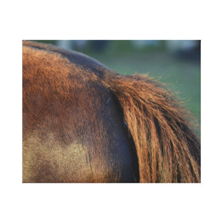 brown horse pony tail flank equine animal design gallery wrap canvas