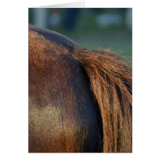brown horse pony tail flank equine animal design card