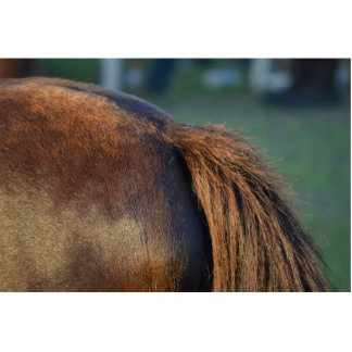 brown horse pony tail flank equine animal design photo cut outs