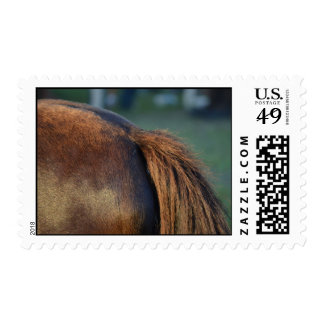 brown horse pony tail flank equine animal design postage