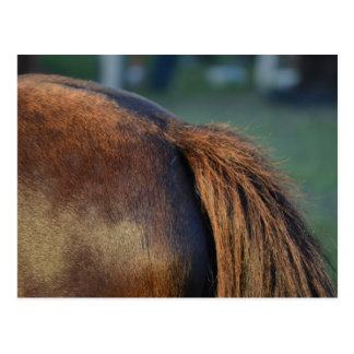 brown horse pony tail flank equine animal design postcard