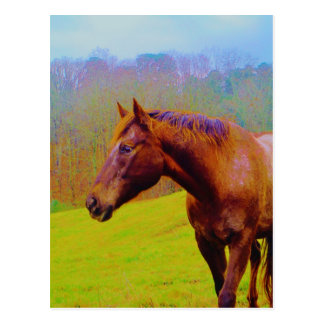 Brown Horse Rainbow Forest Postcard