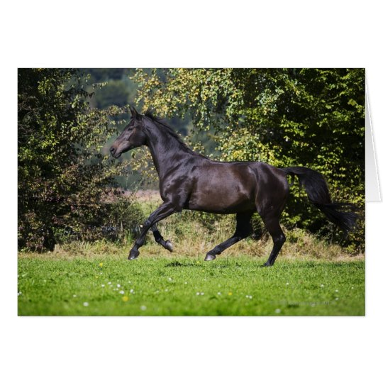 brown horse running on meadow card