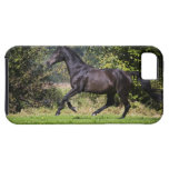 brown horse running on meadow iPhone SE/5/5s case