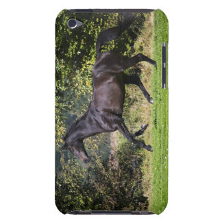 brown horse running on meadow iPod Case-Mate cases