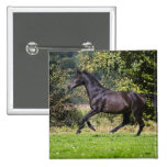 brown horse running on meadow pinback button