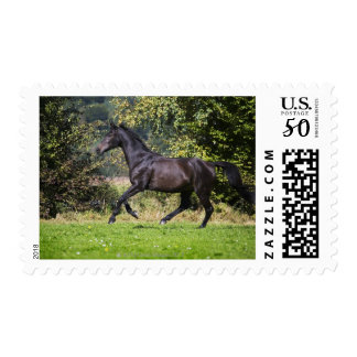 brown horse running on meadow postage