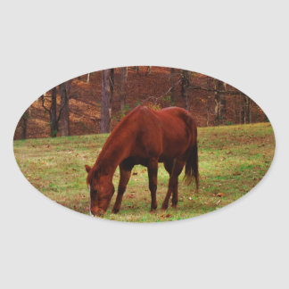 Brown Horse w/ White Nose at Woods Edge Oval Sticker