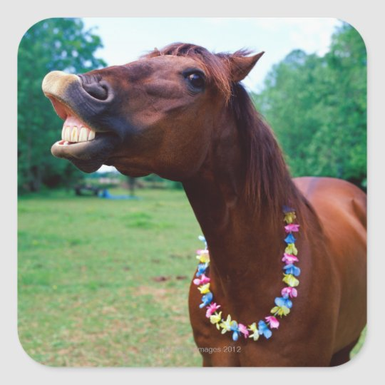 Brown horse wearing necklace, baring teeth, square sticker