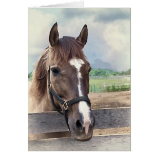 Brown Horse with Bridle Note Card