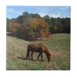 Brown horse with fall trees ceramic tile