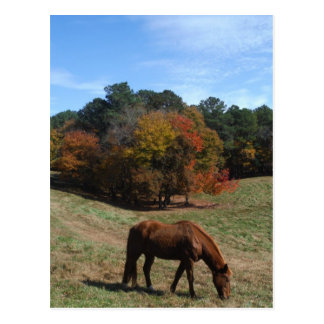 Brown horse with fall trees post card