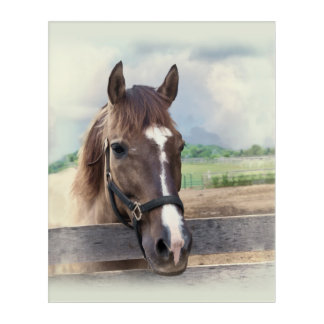 Brown Horse with Halter Acrylic Print