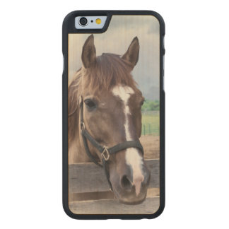 Brown Horse with Halter Carved® Maple iPhone 6 Case