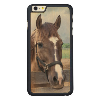 Brown Horse with Halter Carved® Maple iPhone 6 Plus Case