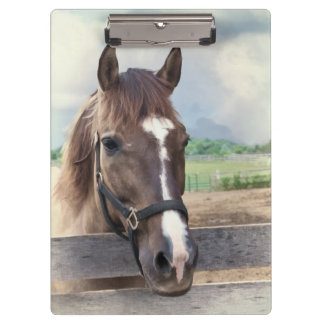 Brown Horse with Halter Clipboard