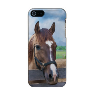 Brown Horse with Halter Metallic Phone Case For iPhone SE/5/5s