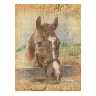 Brown Horse with Halter on Old Wood Postcard