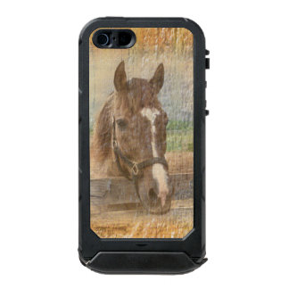 Brown Horse with Halter on Old Wood Waterproof iPhone SE/5/5s Case