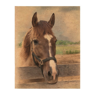 Brown Horse with Halter Cork Paper Prints
