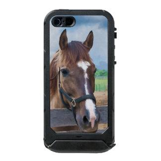 Brown Horse with Halter Waterproof iPhone SE/5/5s Case
