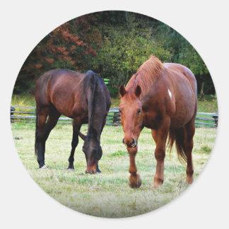 Brown Horses Grazing Classic Round Sticker
