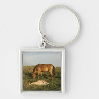 Brown Horses Keychain