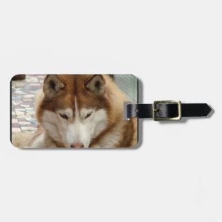 Brown Husky Luggage Tag