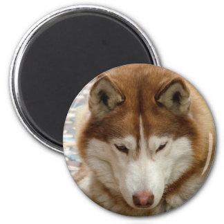 Brown Husky Magnet Refrigerator Magnets