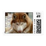 Brown Husky  Postage Stamp