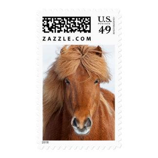Brown Icelandic Horse Portrait Postage