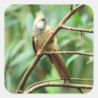 Brown inquisitivo lindo Mousebird Colius Striat Pegatina Cuadrada
